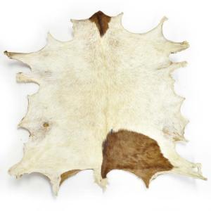 ◎ジャンベ用ヘッド・ブルキナファソ産山羊皮 afromode