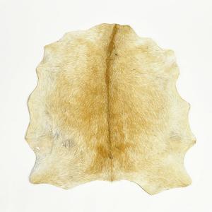 ジャンベ用ヘッド・ギニア産山羊皮 Lサイズ