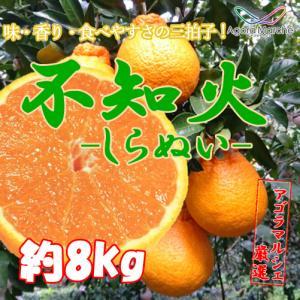 アゴラマルシェ契約農家直送柑橘 八幡浜産不知火(しらぬい)8kg|agoramarche