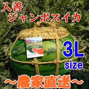 入善ジャンボスイカ 3L(17〜19キロ)  贈答用  / 果物 ギフト スイカ 西瓜 農家直送|agri-takimoto