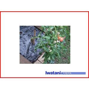 イワタニ 菜園用 たまねぎ用 穴あき黒マルチ 9515 45mm孔 0.02mm×95cm×50m 農業資材 園芸用品 家庭菜園 マルチフィルム ガーデニング