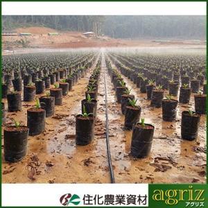 住化農業資材 スミサンスイ マーク2 100m巻 孔径0.3mmφ 潅水チューブ 灌水チューブ|agriz