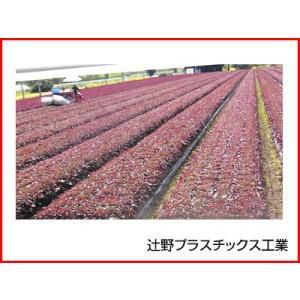 辻野プラスチックス 透明農ポリ 0.1mm×230cm×100m 1本入 農業資材 園芸用品 家庭菜園 一般農ポリ|agriz