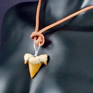 サメの歯 鮫の歯 化石 ペンダント ネックレス パワーストー...