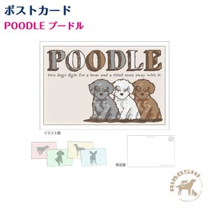 ポストカード プードル 子犬 ネコポス発送OK!【配送区分:P】|aiboshi
