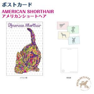 ポストカード アメリカンショートヘアー/アメショー ネコポス発送OK!【配送区分:P】|aiboshi