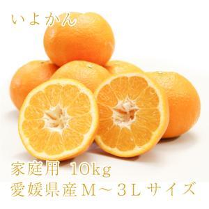 いよかん おいしい みかん 愛媛 中島産 フルーツ 柑橘 家庭用 10kg 送料無料|ailine