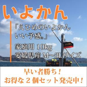 いよかん おいしい みかん 愛媛 中島産 フルーツ 柑橘 家庭用 10kg お得な2個セット 送料無料 ailine