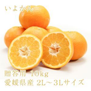 いよかん おいしい みかん 愛媛 中島産 フルーツ 柑橘 贈答用 10kg 送料無料|ailine