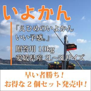 いよかん おいしい みかん 愛媛 中島産 フルーツ 柑橘 贈答用 10kg お得な2個セット 送料無料 ailine