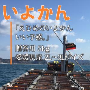 いよかん おいしい みかん 愛媛 中島産 フルーツ 柑橘 贈答用 5kg 送料無料|ailine