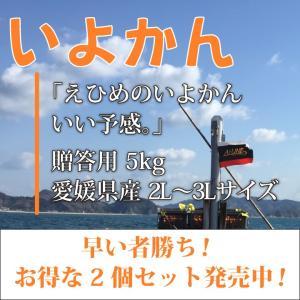 いよかん おいしい みかん 愛媛 中島産 フルーツ 柑橘 贈答用 5kg お得な2個セット 送料無料 ailine