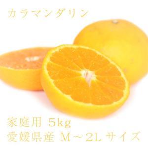 カラマンダリン おいしい みかん 愛媛 中島産 フルーツ 柑橘 家庭用 5kg 送料無料|ailine