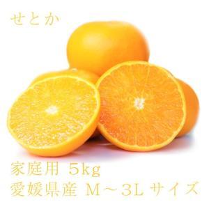 せとか おいしい みかん 愛媛 中島産 フルーツ 柑橘 家庭用 5kg 送料無料|ailine