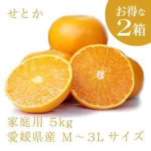 せとか おいしい みかん 愛媛 中島産 フルーツ 柑橘 家庭用 5kg お得な2個セット 送料無料 ailine