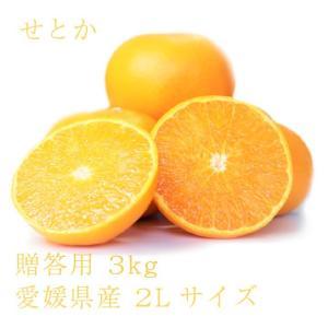 せとか おいしい みかん 愛媛 中島産 フルーツ 柑橘 贈答用 3kg 送料無料|ailine
