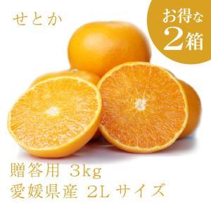 せとか おいしい みかん 愛媛 中島産 フルーツ 柑橘 贈答用 3kg お得な2個セット 送料無料 ailine
