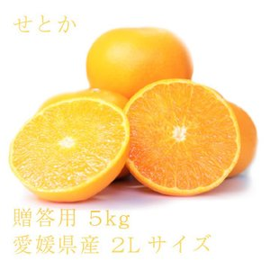 せとか おいしい みかん 愛媛 中島産 フルーツ 柑橘 贈答用 5kg 送料無料|ailine