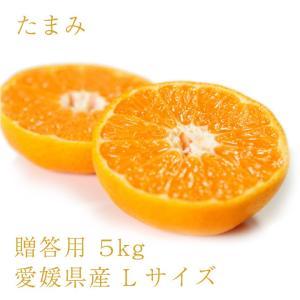 たまみ おいしい みかん 愛媛 中島産 フルーツ 柑橘 贈答用 L5kg 送料無料|ailine