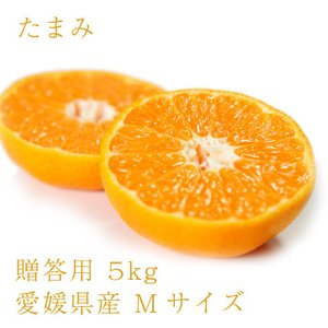 たまみ おいしい みかん 愛媛 中島産 フルーツ 柑橘 贈答用 M5kg 送料無料|ailine