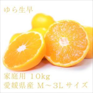 ゆら早生 おいしい みかん 愛媛 中島産 フルーツ 柑橘 家庭用 10kg 送料無料|ailine
