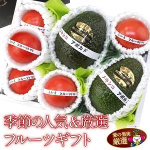 トマト アボカド 果物 くだもの 父の日 母の日【季節の人気&厳選フルーツギフト (フルーツトマト5個 アボカド(プロミッチゴールド)2個)】|aino-kajitu