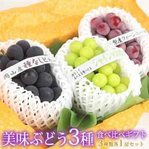 ぶどう フルーツ くだもの 果物【国産 美味 種なし ぶどう 3種 食べ比べ ギフトセット(シャインマスカット1種 赤ぶどう1種 黒ぶどう1種)】|aino-kajitu
