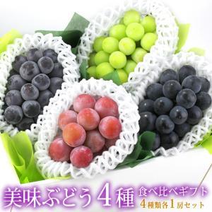 ぶどう フルーツ くだもの 果物【国産 美味 種なし ぶどう 4種 食べ比べ ギフトセット(シャインマスカット1種 赤ぶどう1種 黒ぶどう2種)】|aino-kajitu