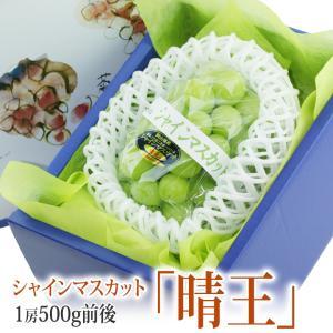 ぶどう フルーツ くだもの 果物 父の日 お中元【晴王 (はれおう) シャインマスカット】1房 500g前後 (岡山産) 高糖度|aino-kajitu