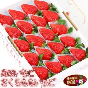 イチゴ 苺 果物 くだもの フルーツ 端午の節句【送料無料】【国産 高級 いちご(さくらももいちご)】|aino-kajitu