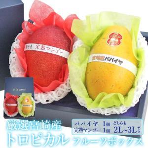 マンゴー パパイヤ くだもの 果物 暑中見舞い お中元 お盆 父の日【厳選 国産 トロピカル フルーツボックス(宮崎産 完熟マンゴー パパイヤ)2L〜3L】|aino-kajitu