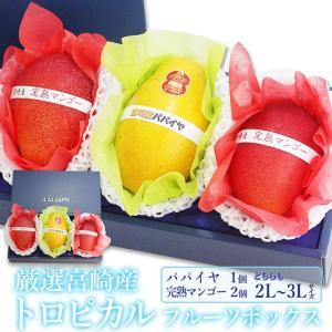 マンゴー パパイヤ くだもの 果物 暑中見舞い お中元 お盆 父の日【厳選 国産 トロピカル フルーツボックス(宮崎産 完熟マンゴー 2個 パパイヤ 1個)2L〜3L】|aino-kajitu
