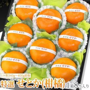 みかん 蜜柑 柑橘 フルーツ くだもの 果物 桃の節句 ひなまつり ホワイトデー【せとか(長崎産 佐賀産)中玉 8個入】|aino-kajitu