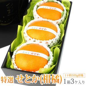 みかん 蜜柑 柑橘 フルーツ くだもの 果物 桃の節句 ひなまつり ホワイトデー【せとか(長崎産 佐賀産)大玉 3個入】|aino-kajitu