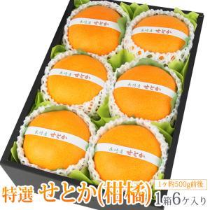 みかん 蜜柑 柑橘 フルーツ くだもの 果物 桃の節句 ひなまつり ホワイトデー【せとか(長崎産 佐賀産)大玉 6個入】|aino-kajitu