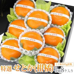 みかん 蜜柑 柑橘 フルーツ くだもの 果物 桃の節句 ひなまつり ホワイトデー【送料無料】【せとか(長崎産 佐賀産)大玉 8個入】|aino-kajitu