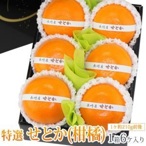 みかん 蜜柑 柑橘 フルーツ くだもの 果物 桃の節句 ひなまつり ホワイトデー【せとか(長崎産 佐賀産)小玉 6個入】|aino-kajitu