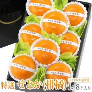 みかん 蜜柑 柑橘 フルーツ くだもの 果物 桃の節句 ひなまつり ホワイトデー【せとか(長崎産 佐賀産)小玉 8個入】|aino-kajitu