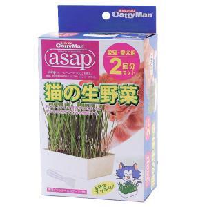 キャティーマン asap猫の生野菜 2回分 ドギーマン|ainstock