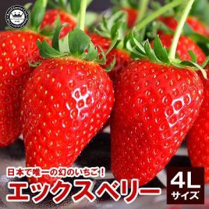 X エックス ベリー いちご 苺 福島県産 4Lサイズ 15粒詰め 送料込み|aionline-japan
