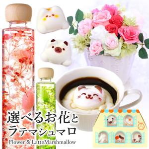 ハーバリウム & Latteマシュマロ ラテマル 5個 手さげ袋 送料無料 | 花 スイーツ セット プレゼント お菓子 かわいい 猫 ねこ 動物|aionline-japan