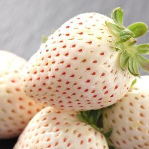 白い苺 いちご パールホワイト 奈良県産 230g 2パック詰め 送料無料|aionline-japan|02