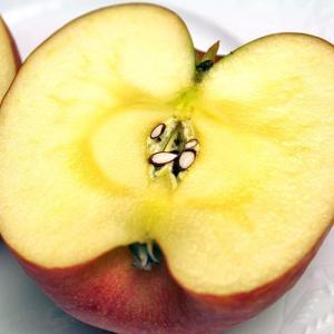 お歳暮 ギフト フルーツ りんご サンふじ 約2kg 5〜6玉入り 岩手県産 生産者限定 くだもの 御歳暮 贈答 贈り物|aionline-japan|02