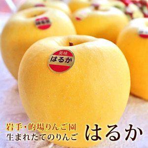 お歳暮 ギフト フルーツ りんご 詰め合わせ はるか 約2kg 5〜6玉入り 岩手県産 生産者限定 くだもの 御歳暮 贈答 贈り物|aionline-japan