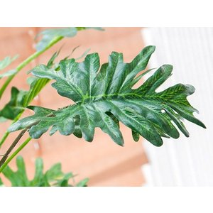 観葉植物 光触媒 スプリット 人工観葉植物 フェイクグリーン インテリア おしゃれ 消臭 防菌 お手入れ不要 テーブルタイプ 光触媒人工植物|air-r|04