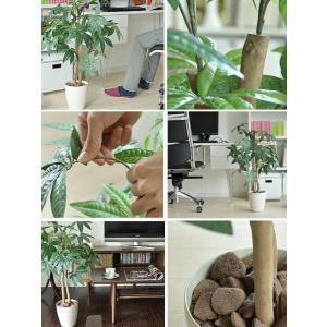 光触媒 観葉植物 パキラ 人工観葉植物 お手入...の詳細画像1