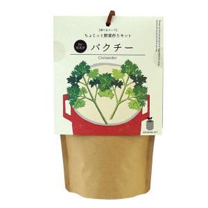 [新商品]聖新陶芸 育てるスープ パクチー コリアンダー 栽培キット 家庭菜園|airleaf