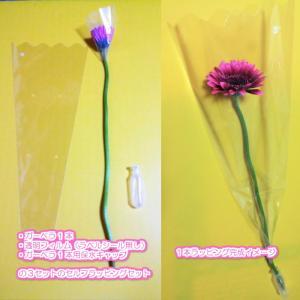 【卒業式・結婚式・イベントなどのプチギフトに】ガーベラの花1本をセルフラッピング 保水キャップ付き (ラベルシール無し)