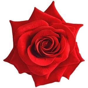カラー各種薔薇のフラワーコサージュ ヘアコサージュ 収納ケース付 (レッド(1個))|airymotion