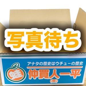 川上みかん(農協出しの規格外)5キロ【出荷は11月末日から随時発送】(規格外S〜2L混合)|aisato